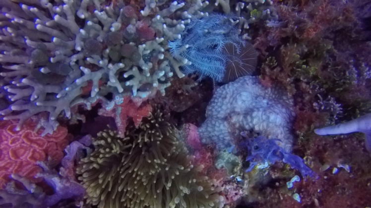 reef color 1.png