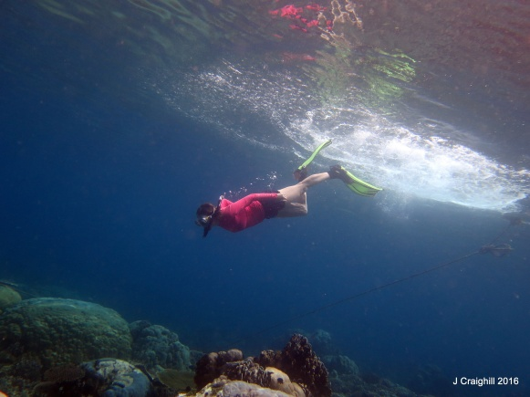 me - free diving duck dive