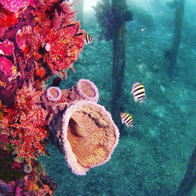 jetty to jetty Raja.jpg