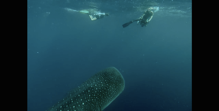 Ash and I and whaleshark 2 .png
